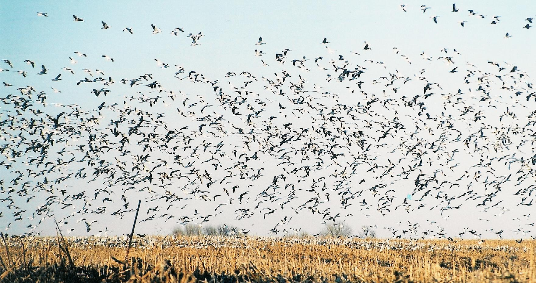 What To Expect On A Guided Waterfowl Hunt