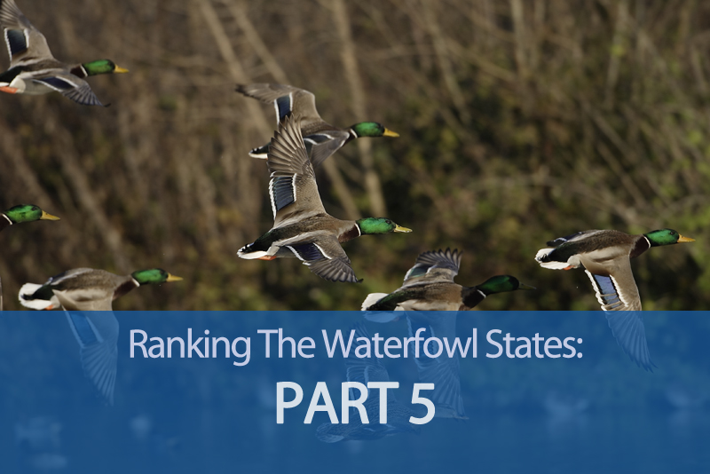 Ranking The Waterfowling States - Part 5 - The Top 10 Waterfowl ...