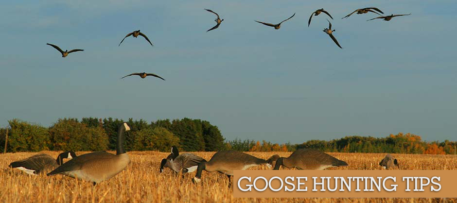 Goose-Hunting-Tips