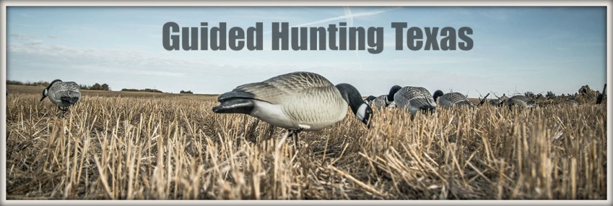 canada goose guided hunts