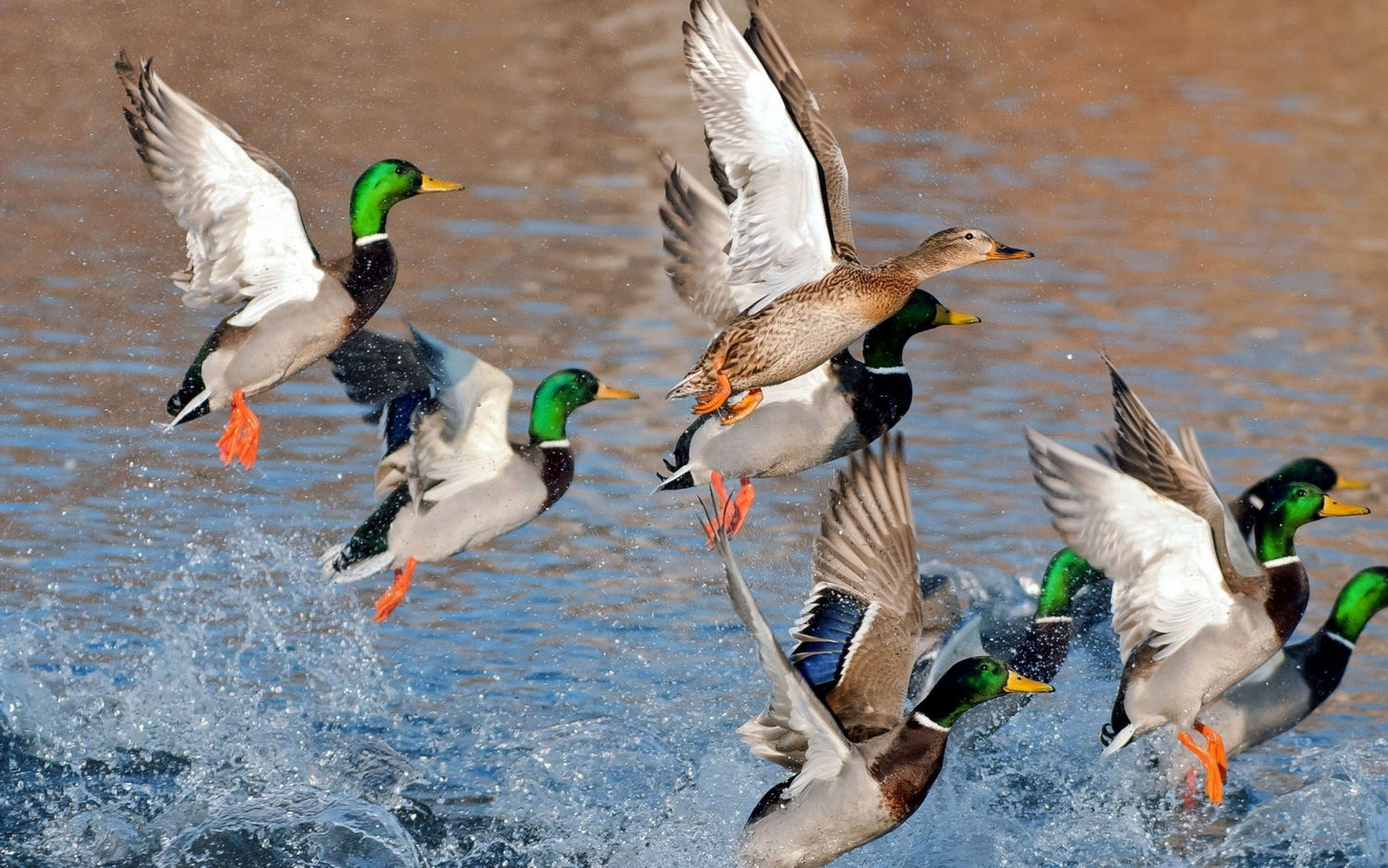 9 Best Duck Hunting Destinations By Species